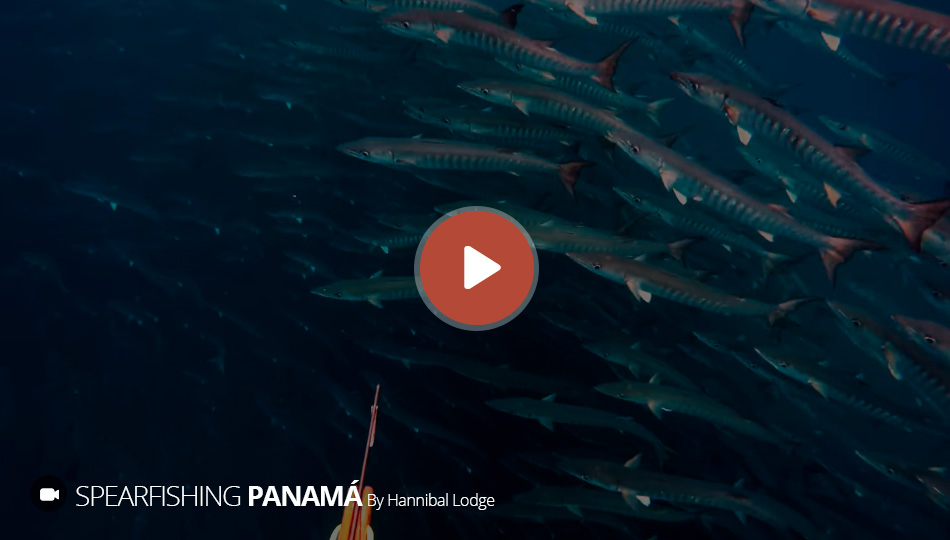 Hannibal Lodge Panama Excursion - Hypoxia HD Spearfishing Video
